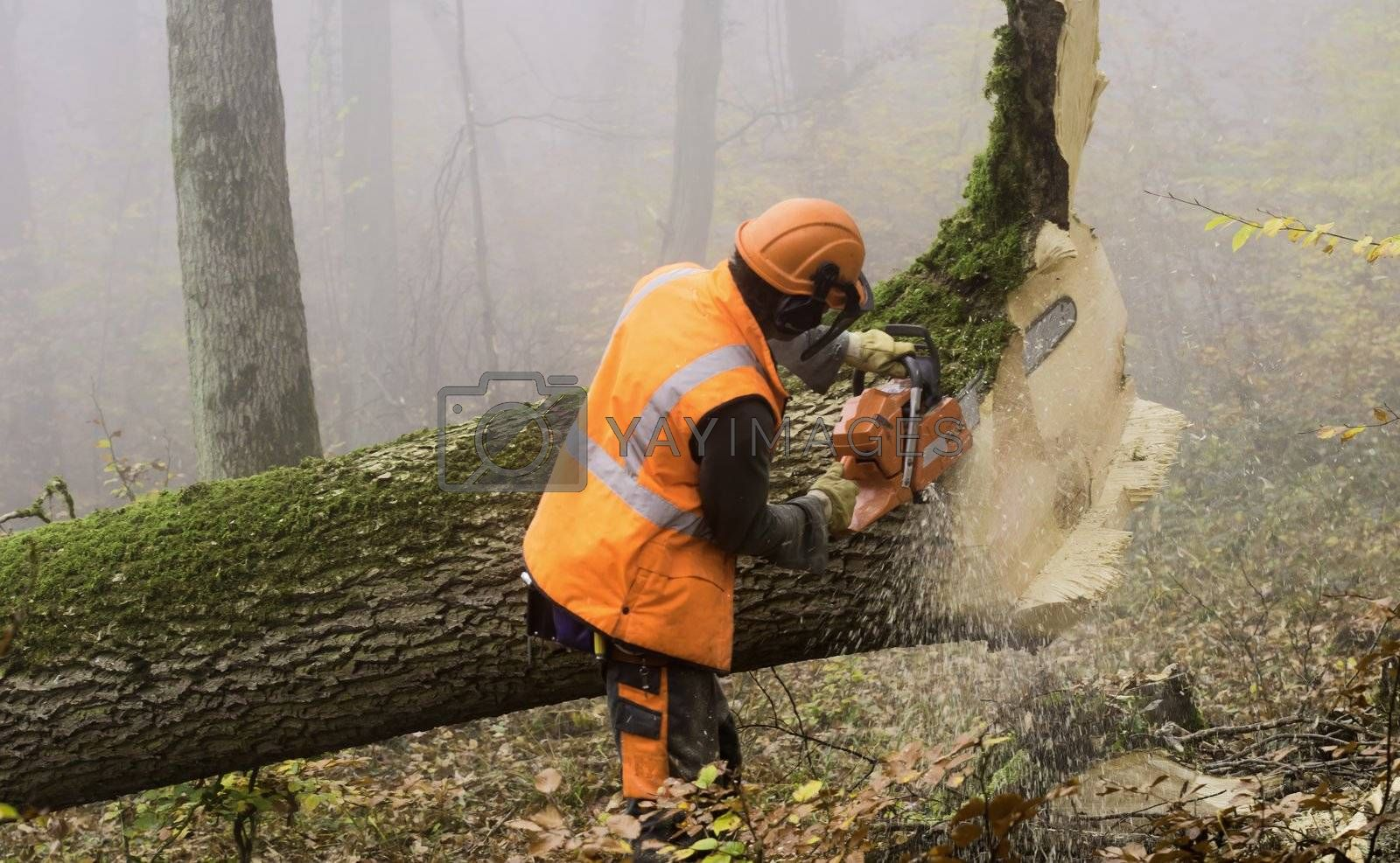 lumberjack at work in a misty forest