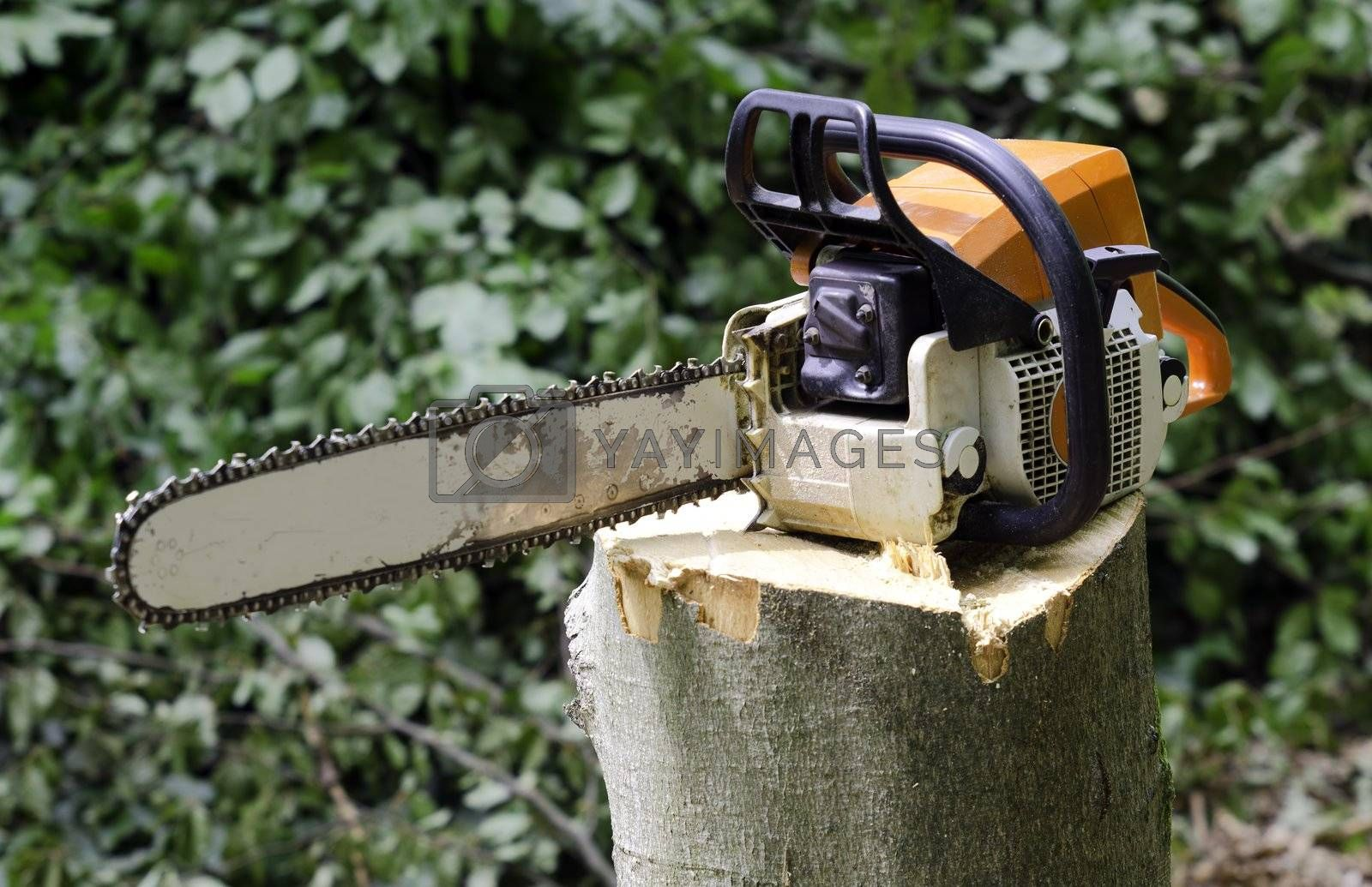chainsaw placed on a tree stump