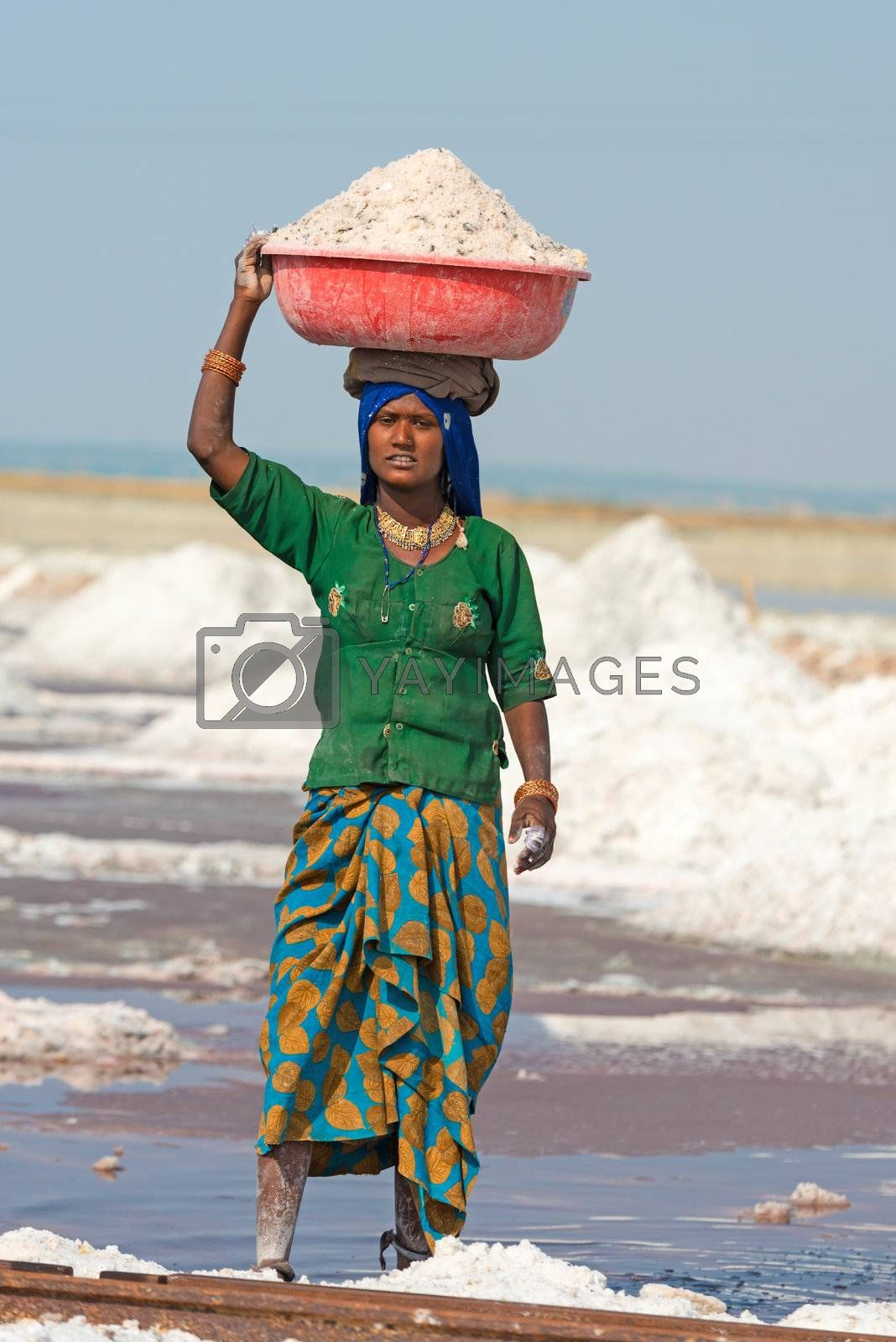 Sambhar, India - Nov 19: Woman carries bowl on head with salt in salt farm on Nov 19, 2012 in Sambhar Salt Lake, India. It is India's largest saline lake and where salt has been farmed for a thousand years.
