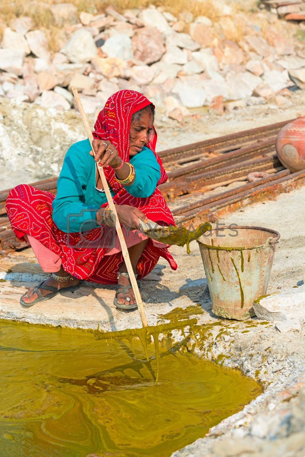 Sambhar, India - Nov 19: Woman collects algae on Nov 19, 2012 in Sambhar Salt Lake, India. The specialized algae and bacteria growing in the lake provide striking water colours.