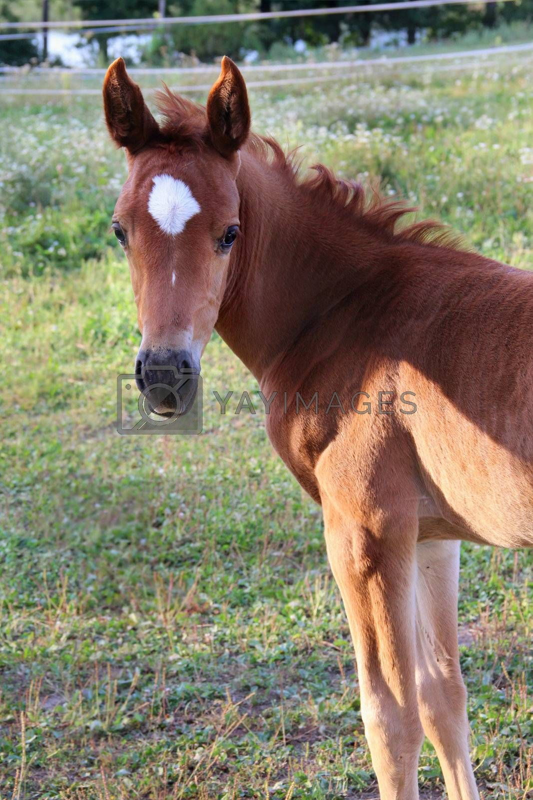 Young small funny horse