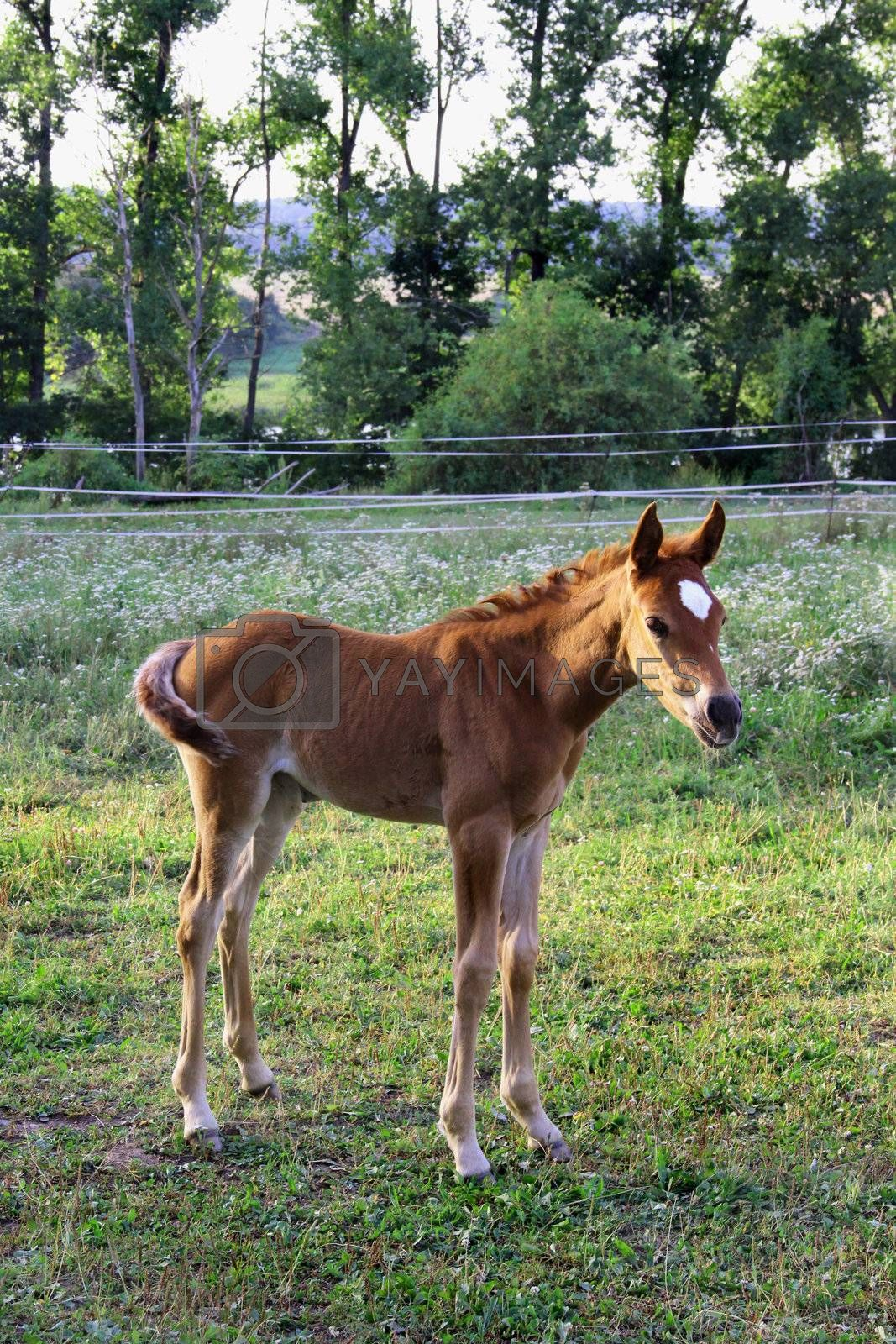 Small funny foal waiting for its mom
