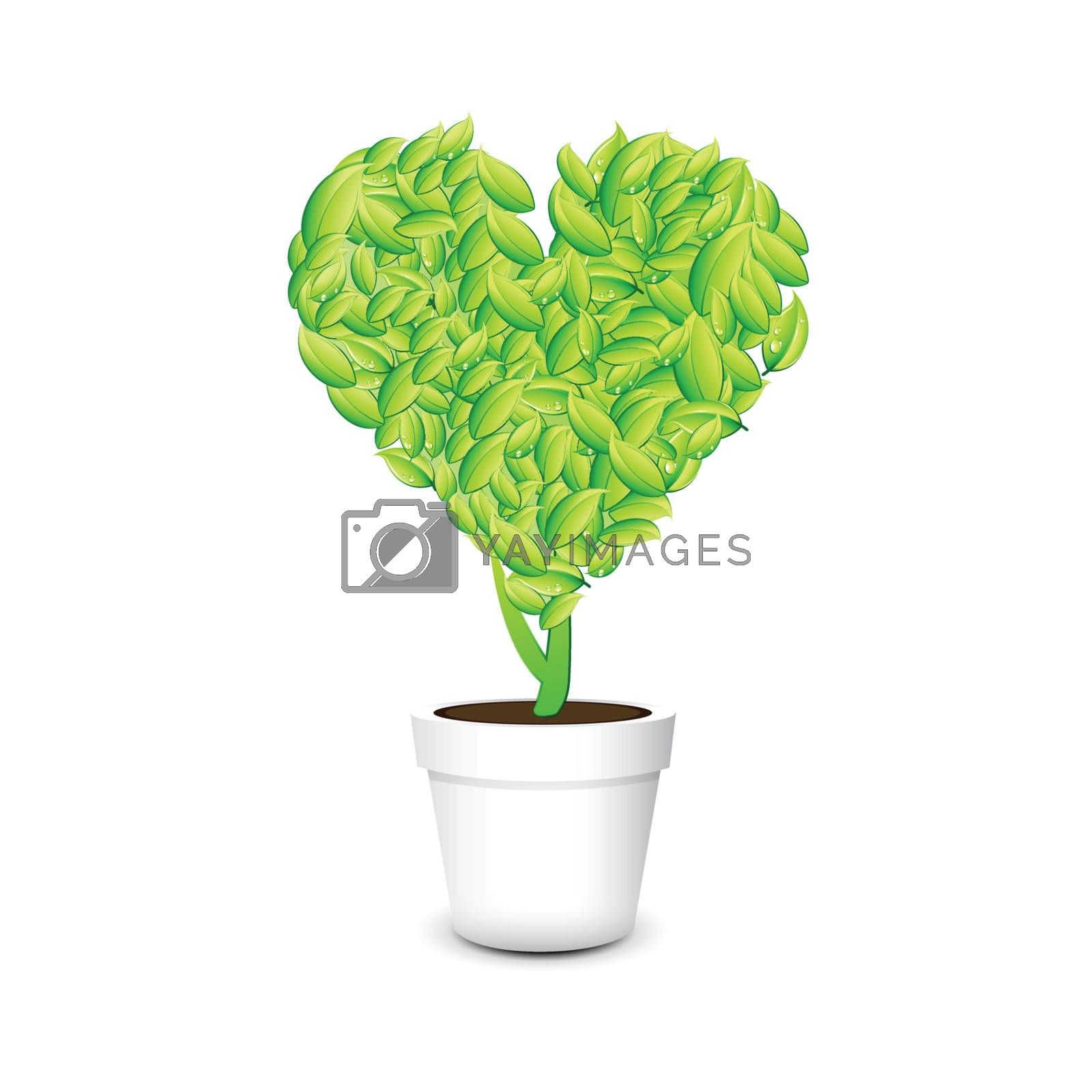 Heart shaped plant in a pot Isolated white background by nirots