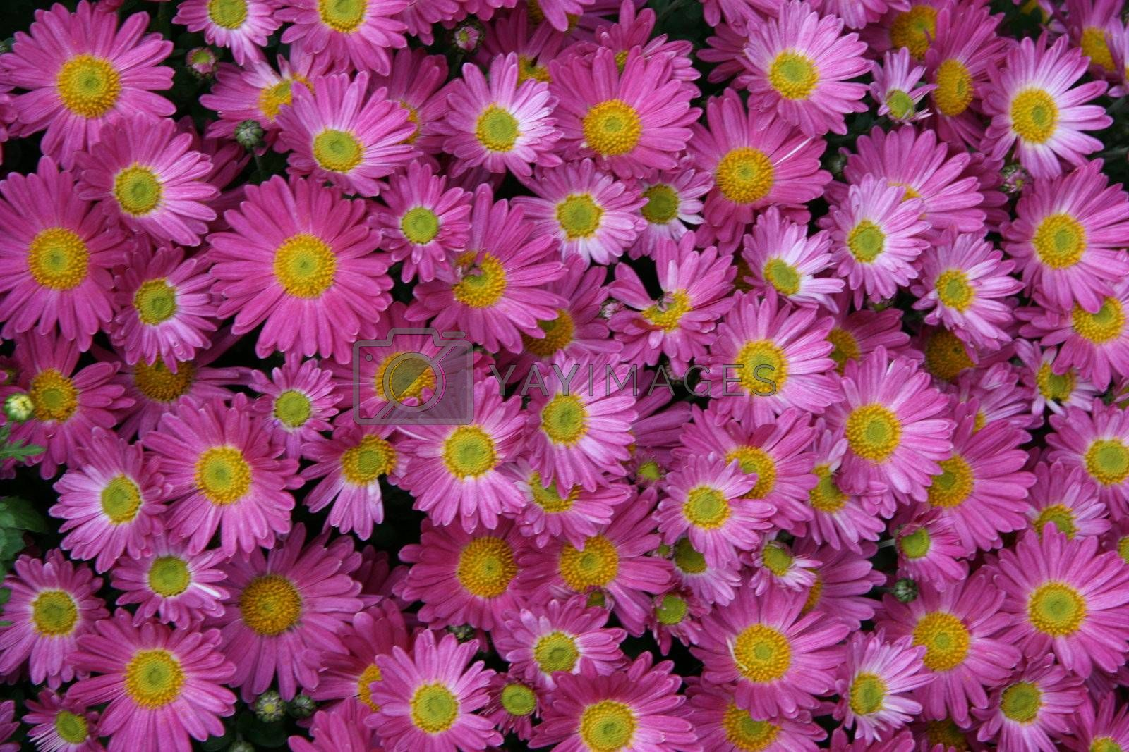 detailed close-up background of vivid fresh flowers