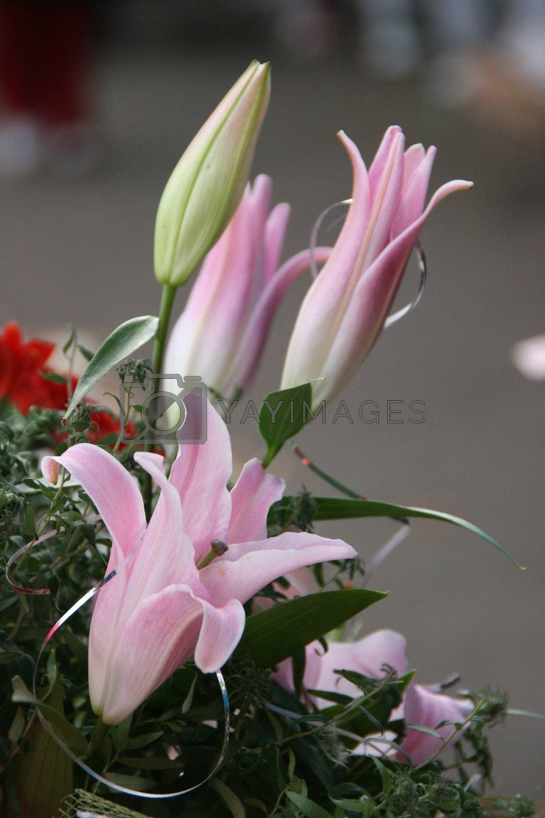 detailed close-up of vivid fresh lilly flowers