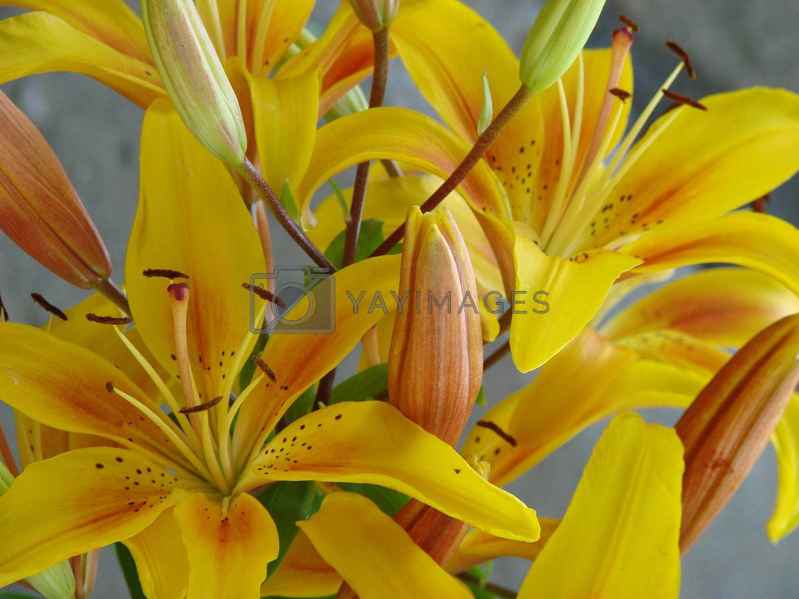 deep yellow big lilly bouquet