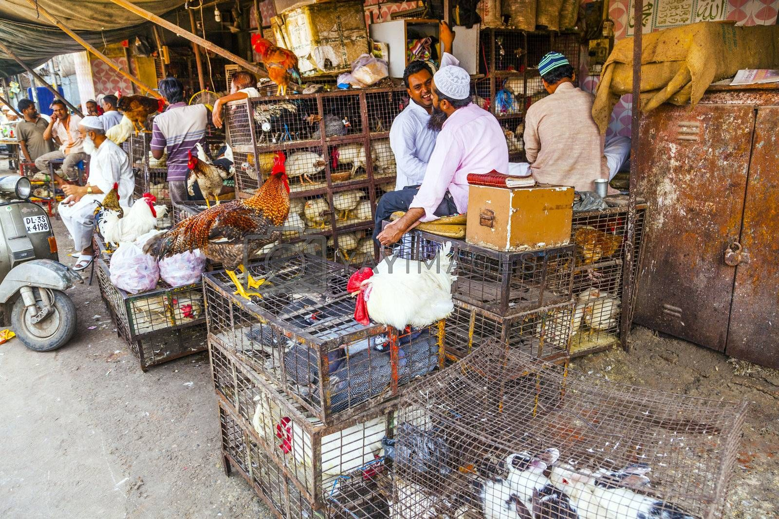 NEW DELHI, INDIA - OCT 10:  Indian men sell their chicken  and cocks in the shade at the weekly big market near Jama Mashid on October 10, 2012 in New Delhi, India.