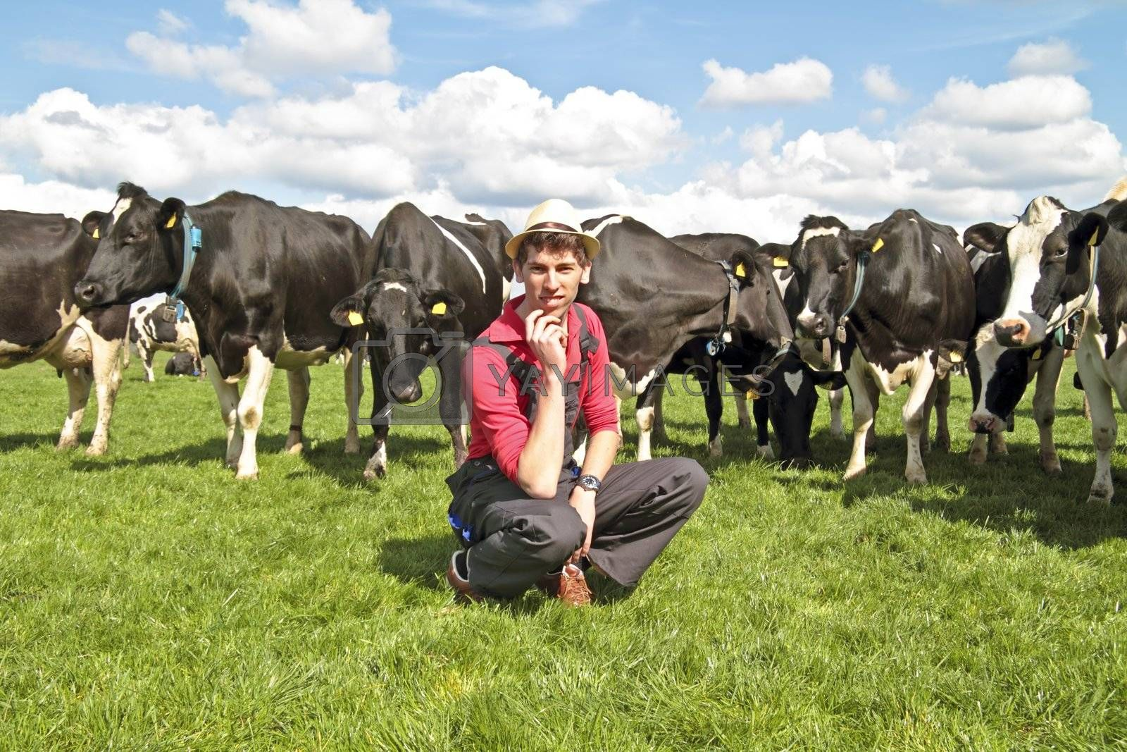 Young dutch farmer with his cows in the countryside