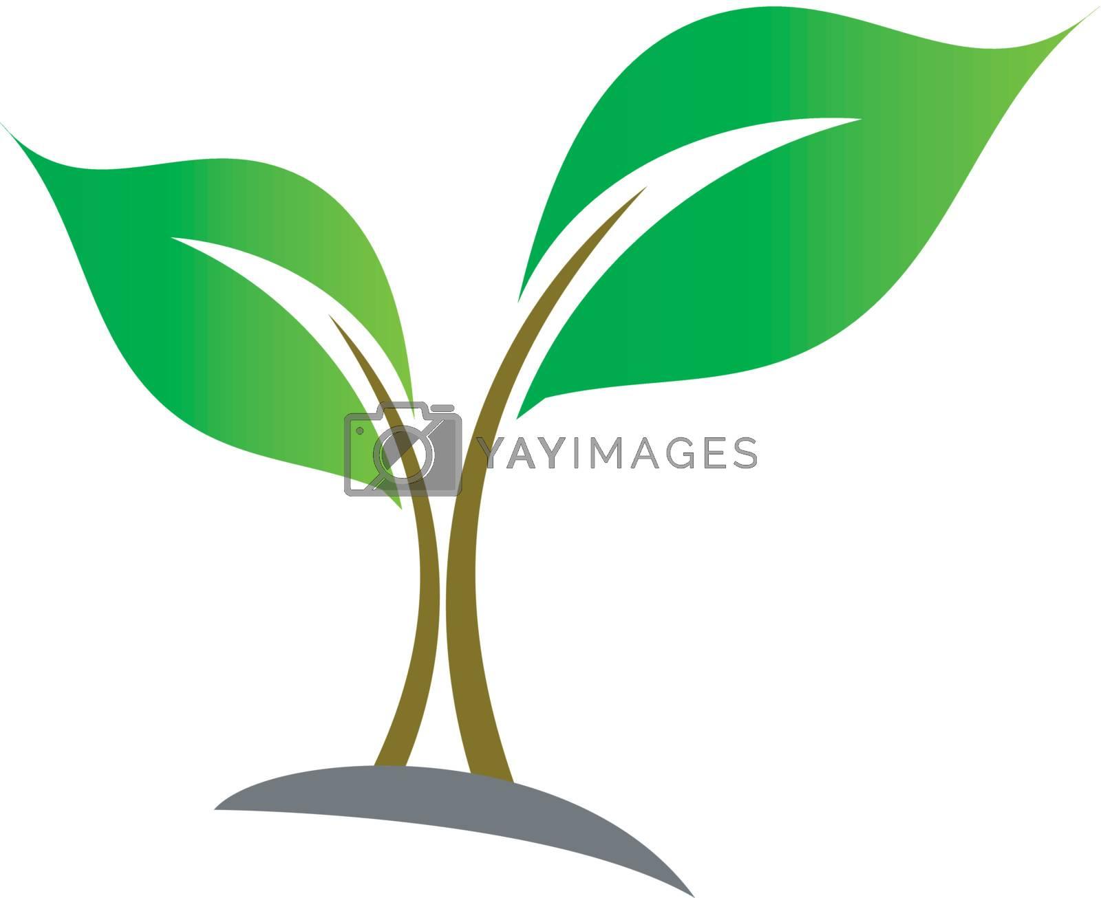 Baby Seedling