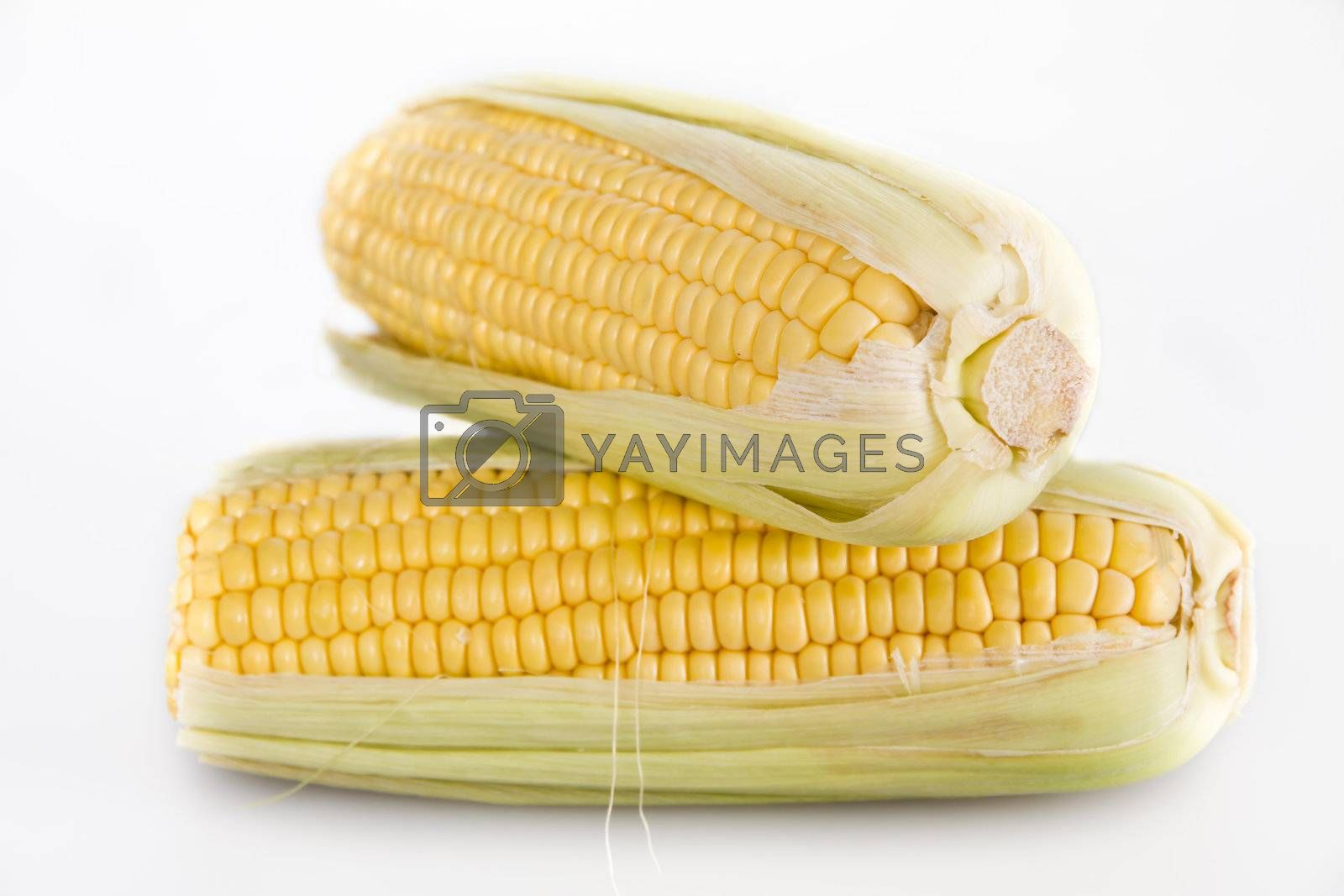 Cob corn isolated over white
