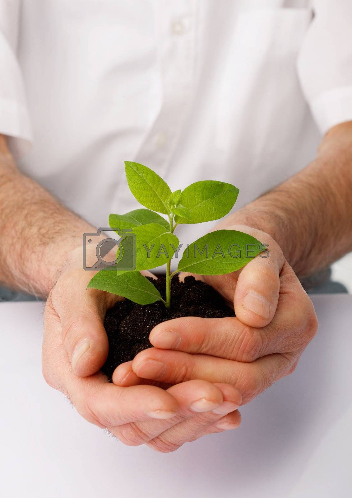 Close-up of a human hands cup a green plant.
