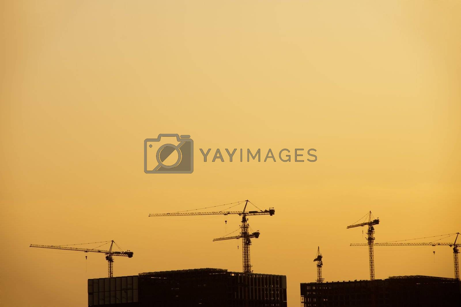 Group of cranes silhouette at sunset