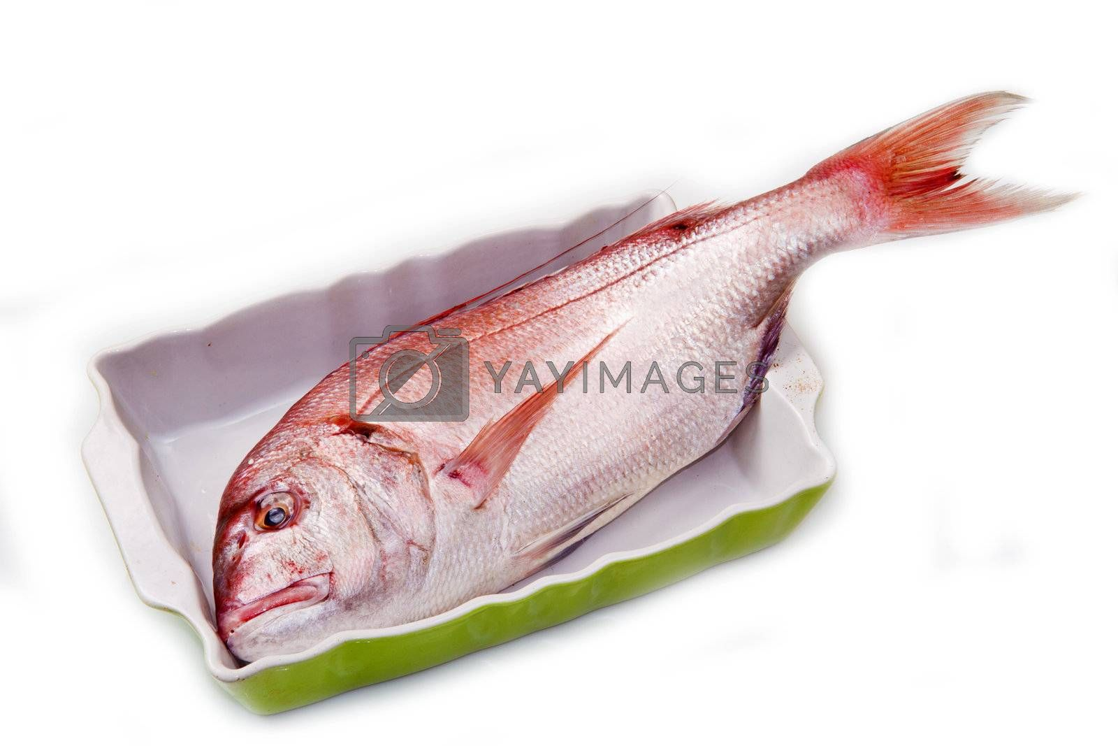 snapper red fish in a baking tin isolated on white