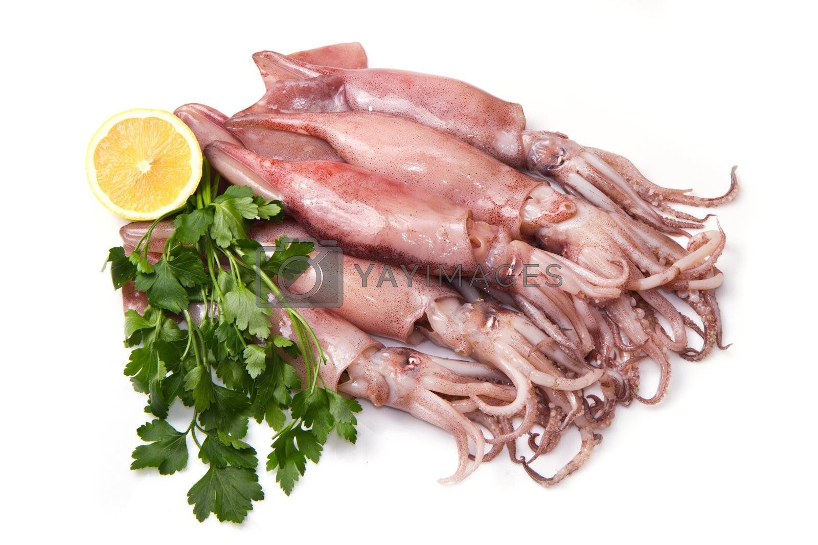 a group of fresh squid with lemon and parsley isolated on white