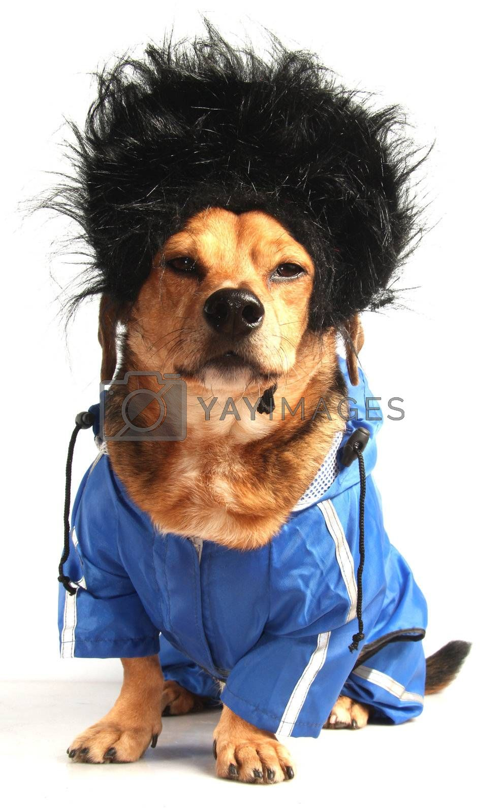 a dog have long black hair