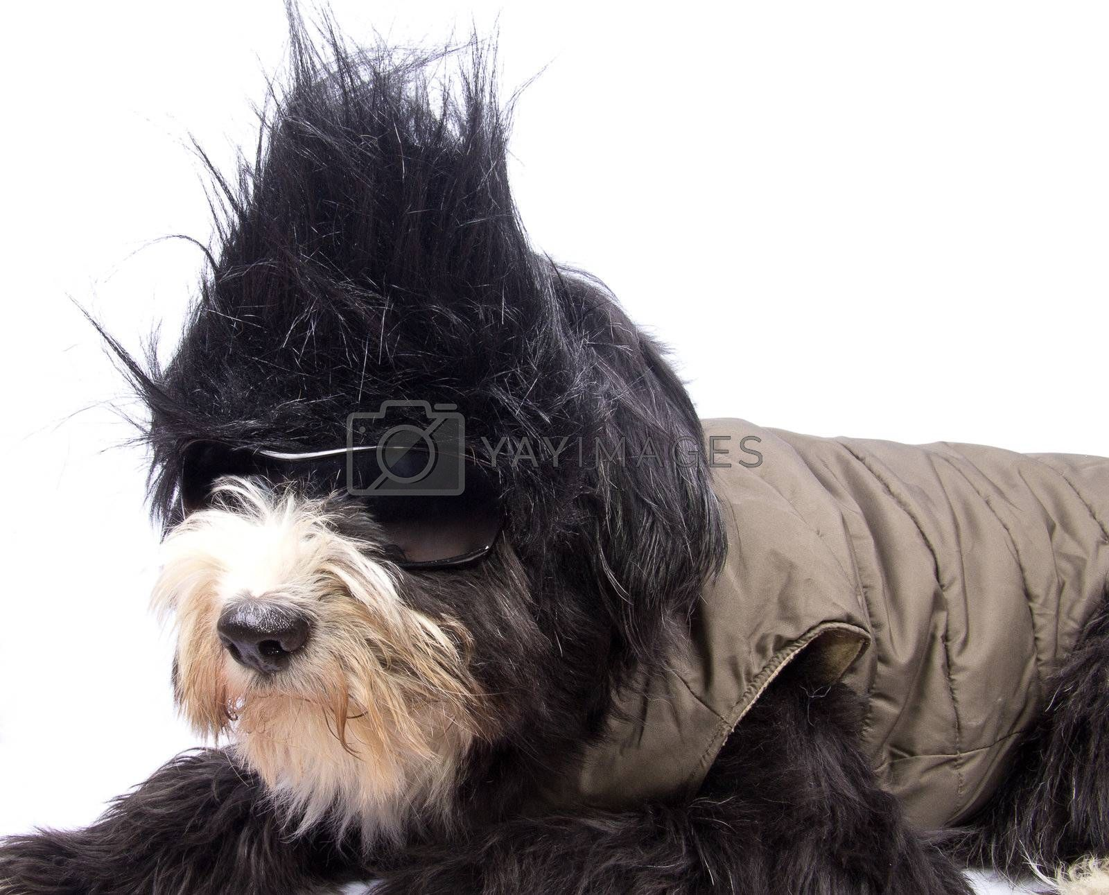 a little dog with the hair black