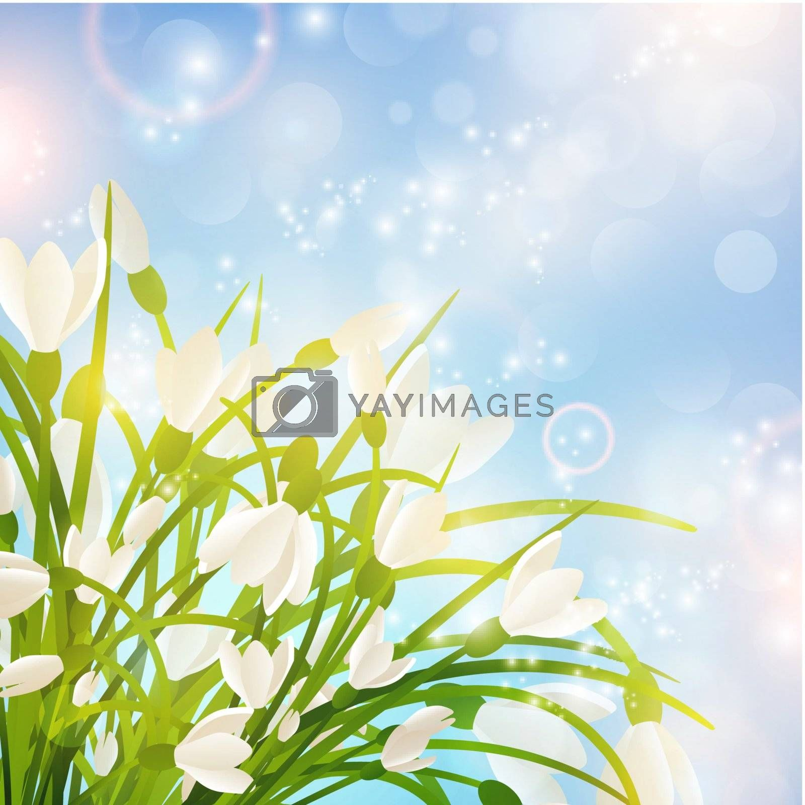 Spring Snowdrop Flowers Over Bright Sunny Background