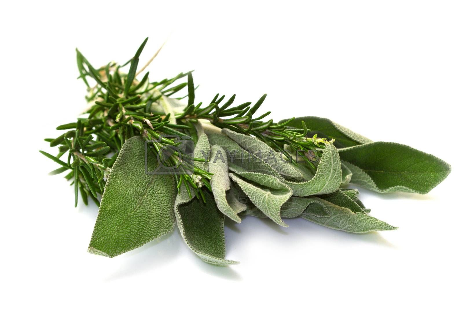 Sage and rosemary on a white background