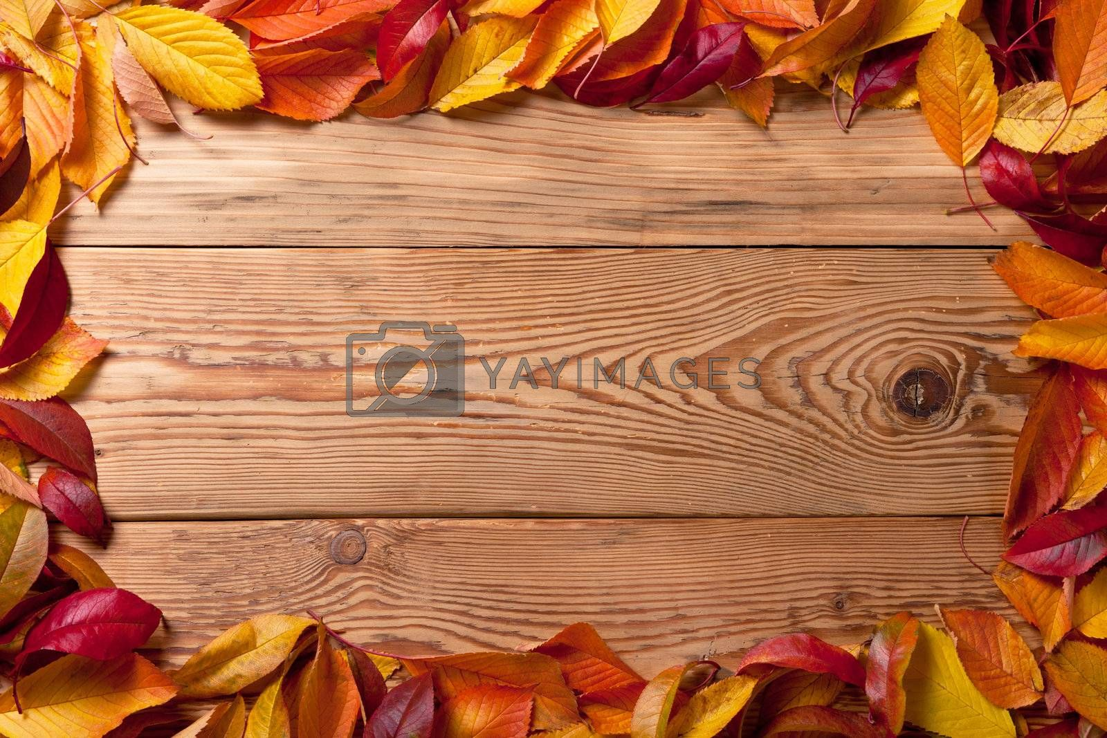 Autumn leaves from fruit trees on wooden background with copy space. Top view