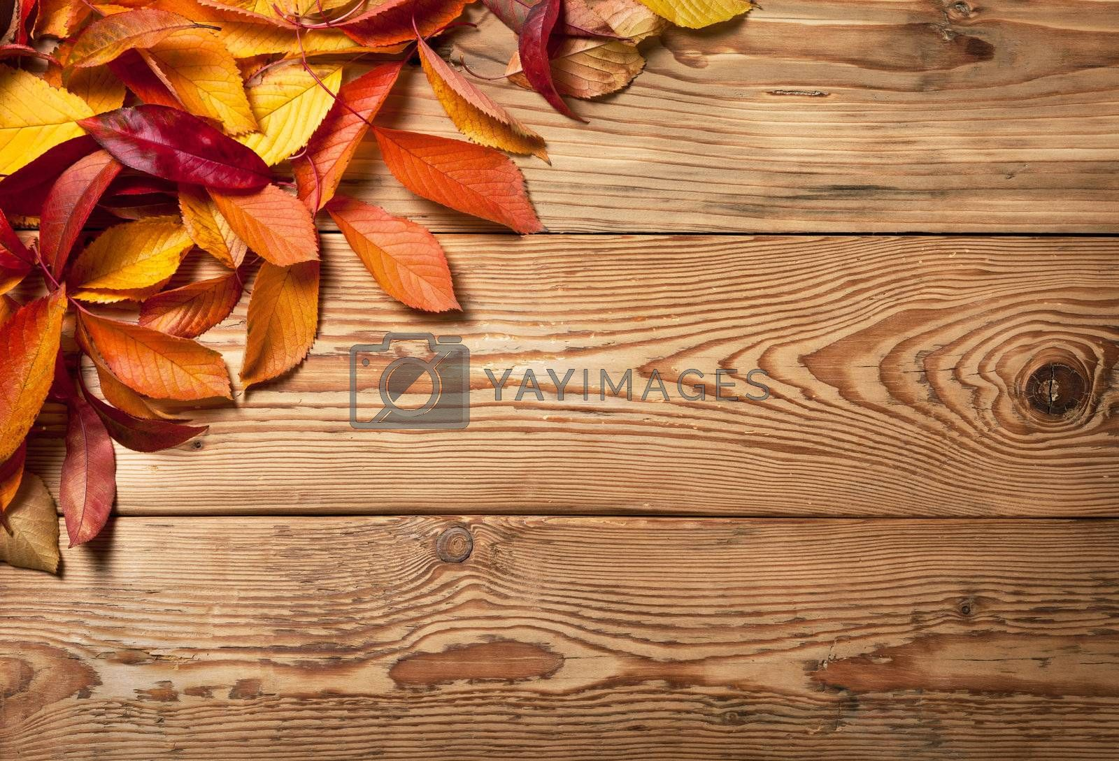Autumn leaves on wooden background with copy space. Top view