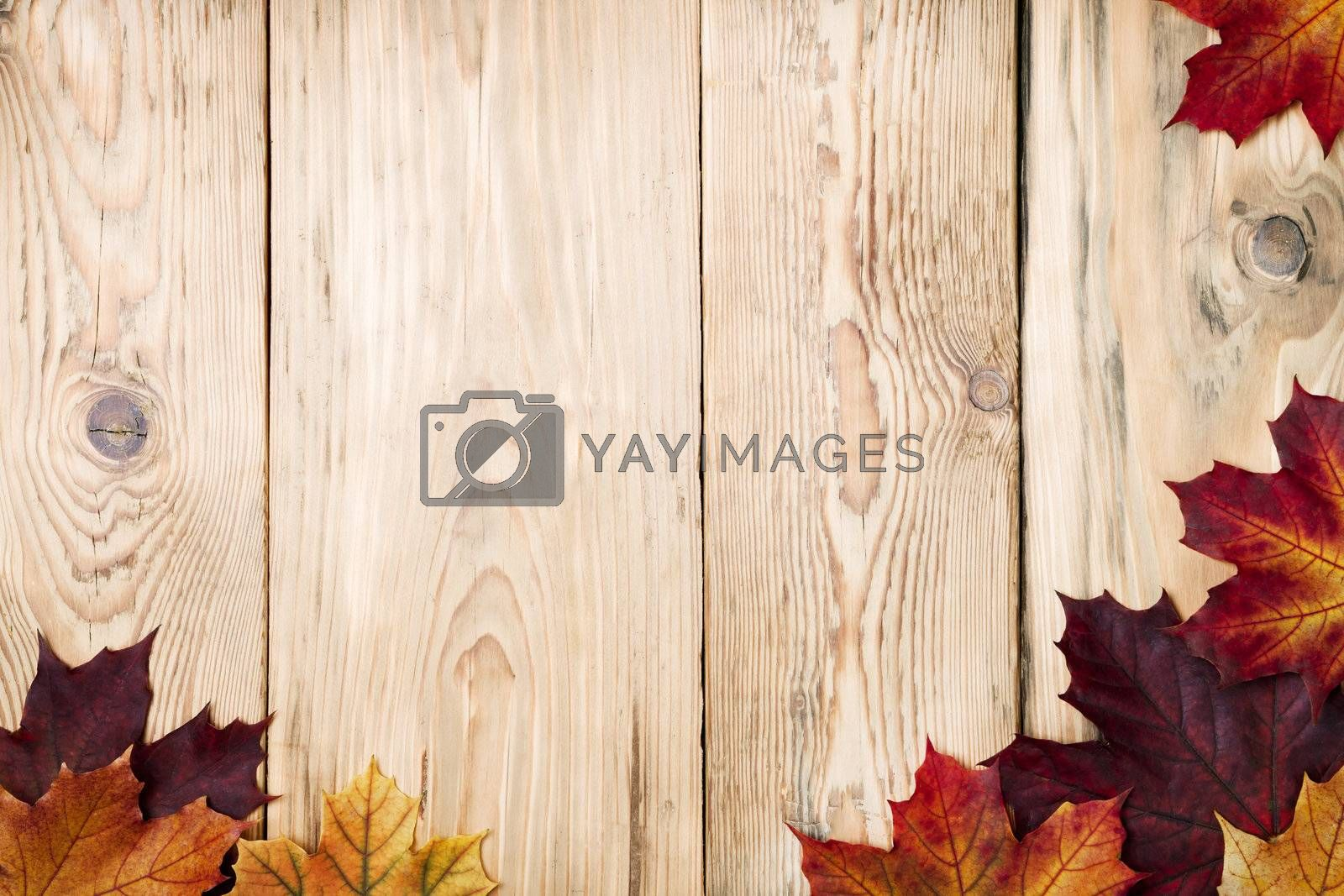 Autumn maple leaves on wooden background with copy space. Top view