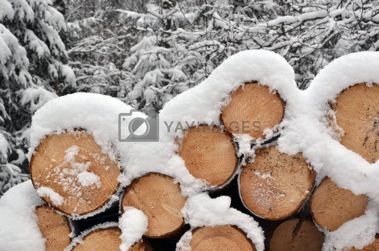 Detail of winter timber stack