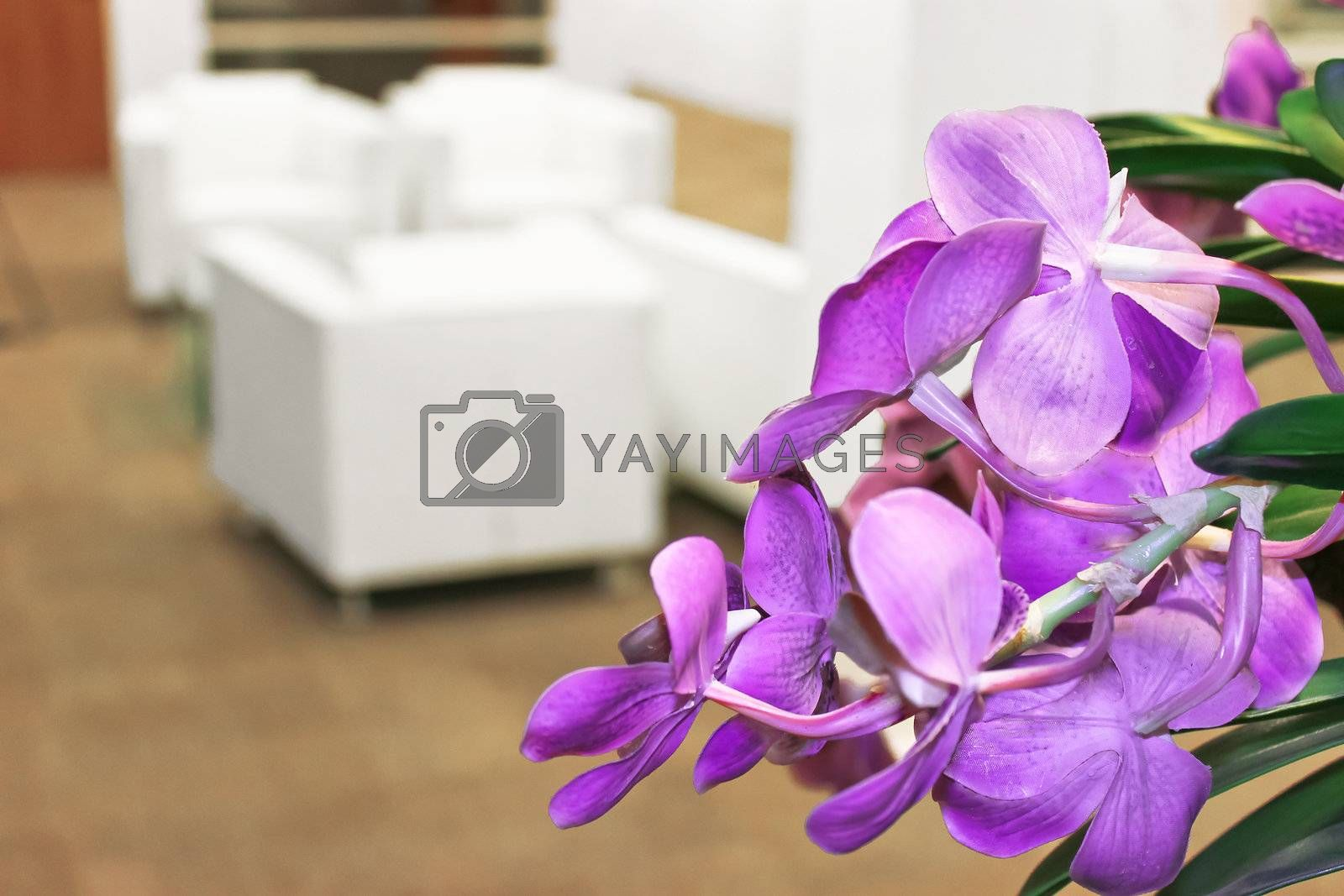 Flowers in the office interior