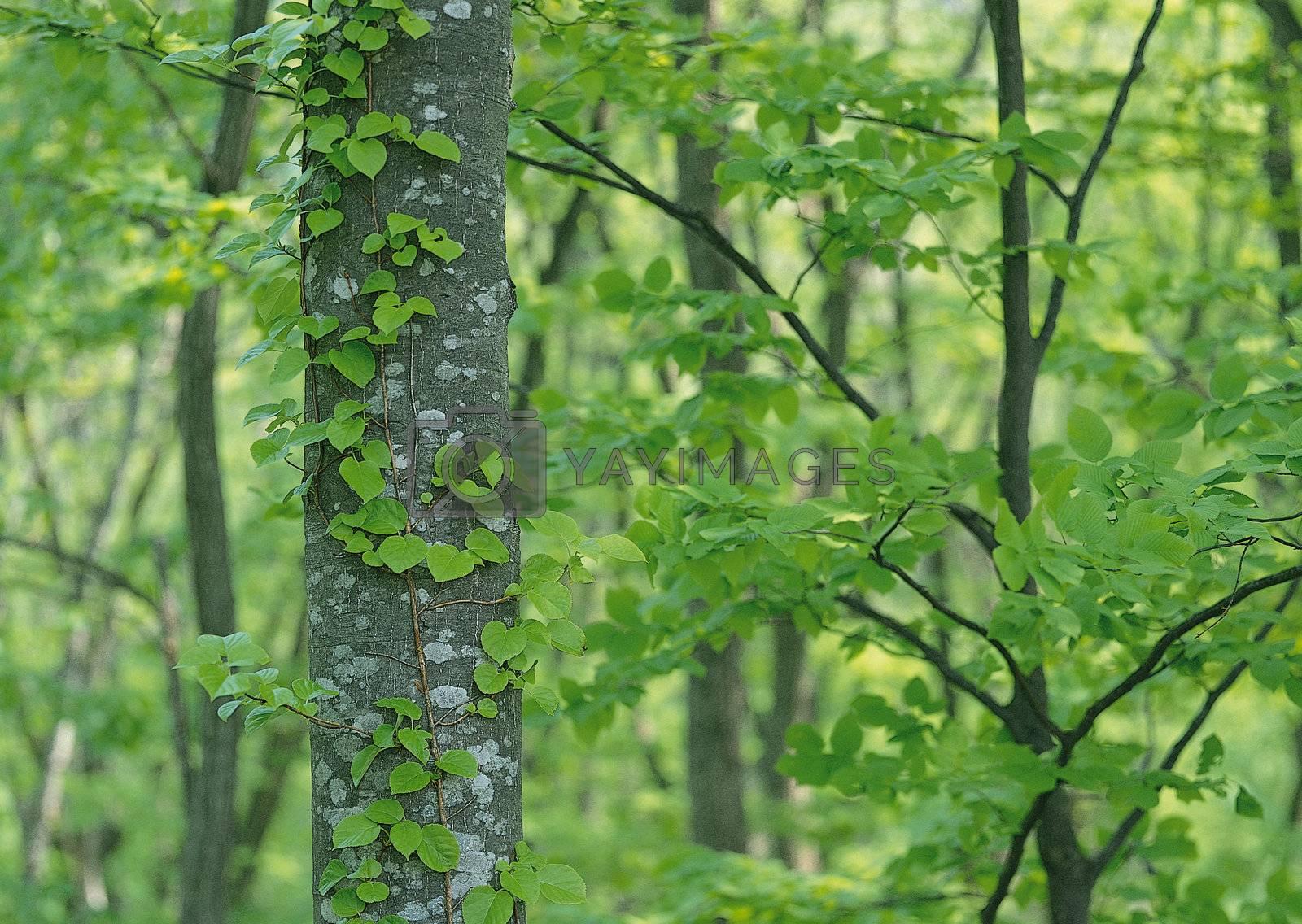 Landscape image - seasons nature