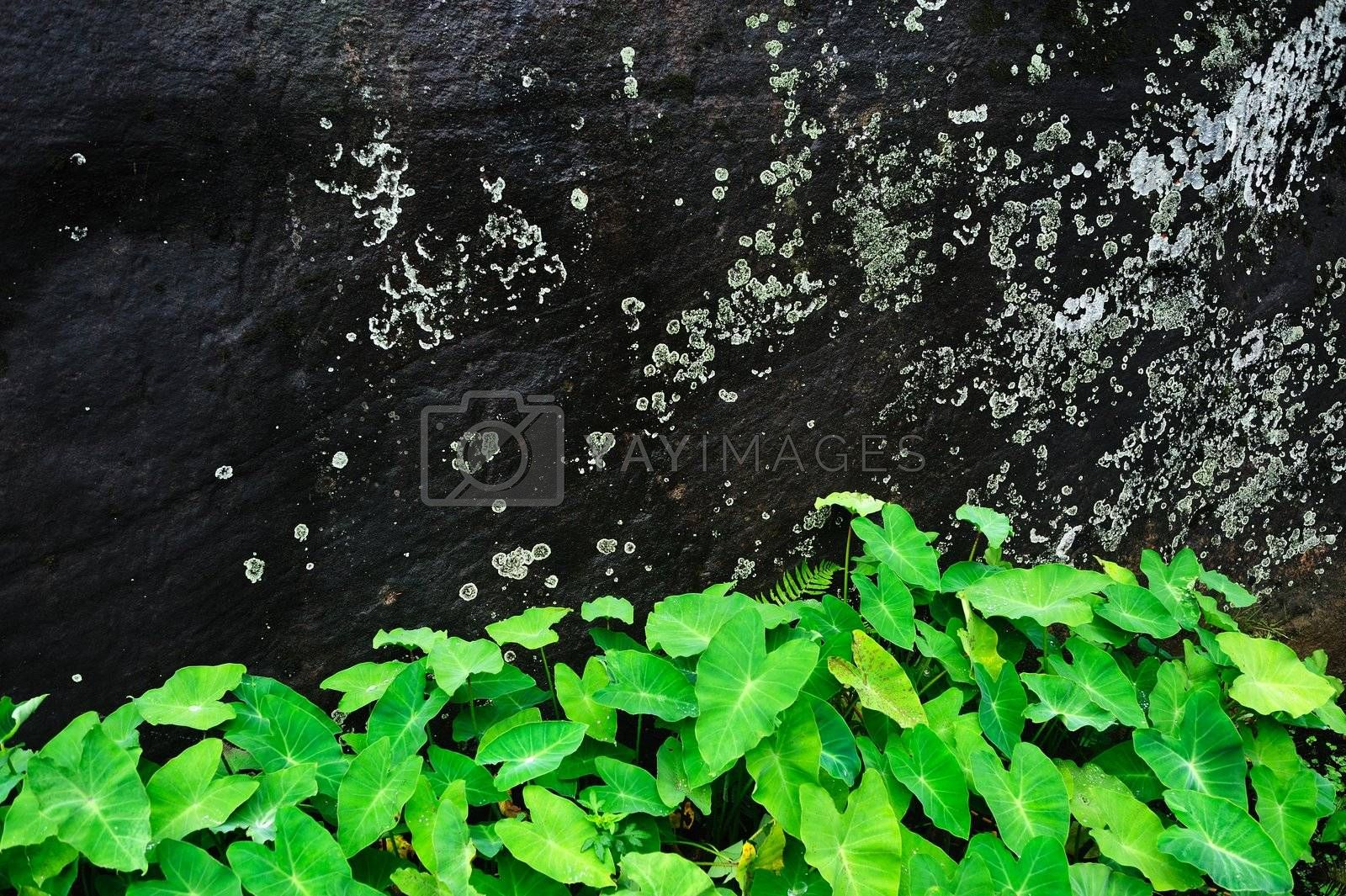 Stone wall with green plants