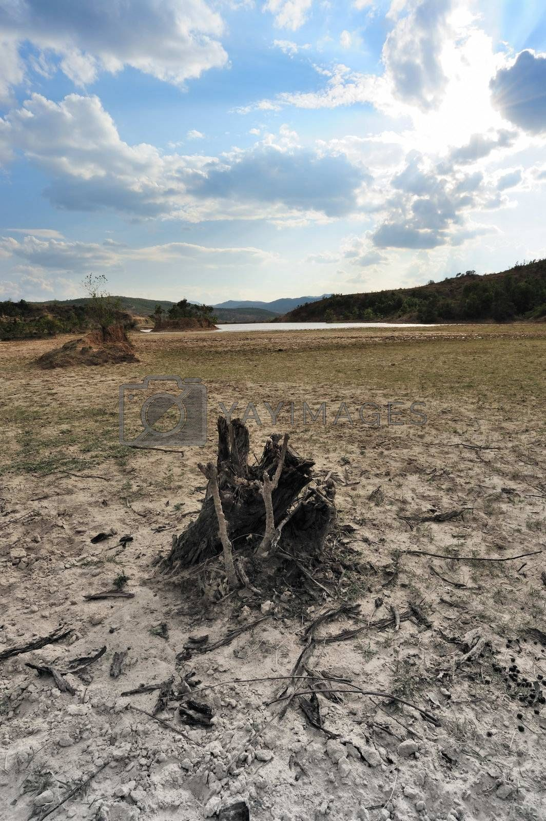 Tree root on the dried field in Yunnan province, China