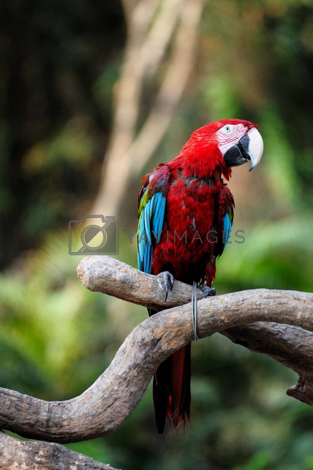 Parrot bird standing on the tree branch