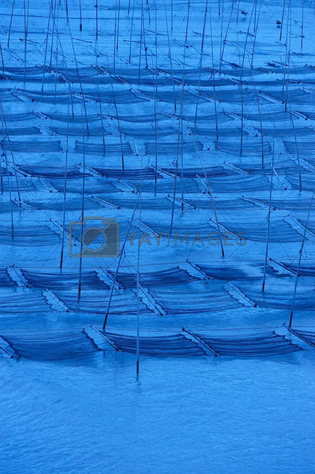 Seaweed farm at dawn, photo taken in Fujian province of China