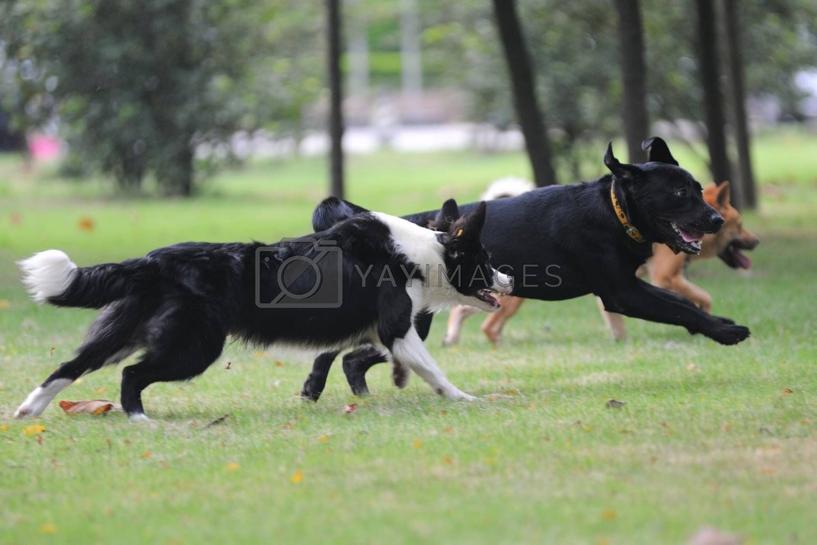 Dogs running together on the lawn