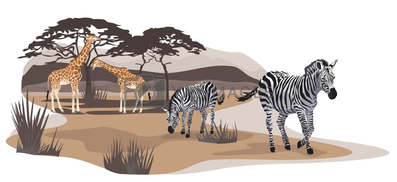 Illustration of zebras and giraffes on savannah