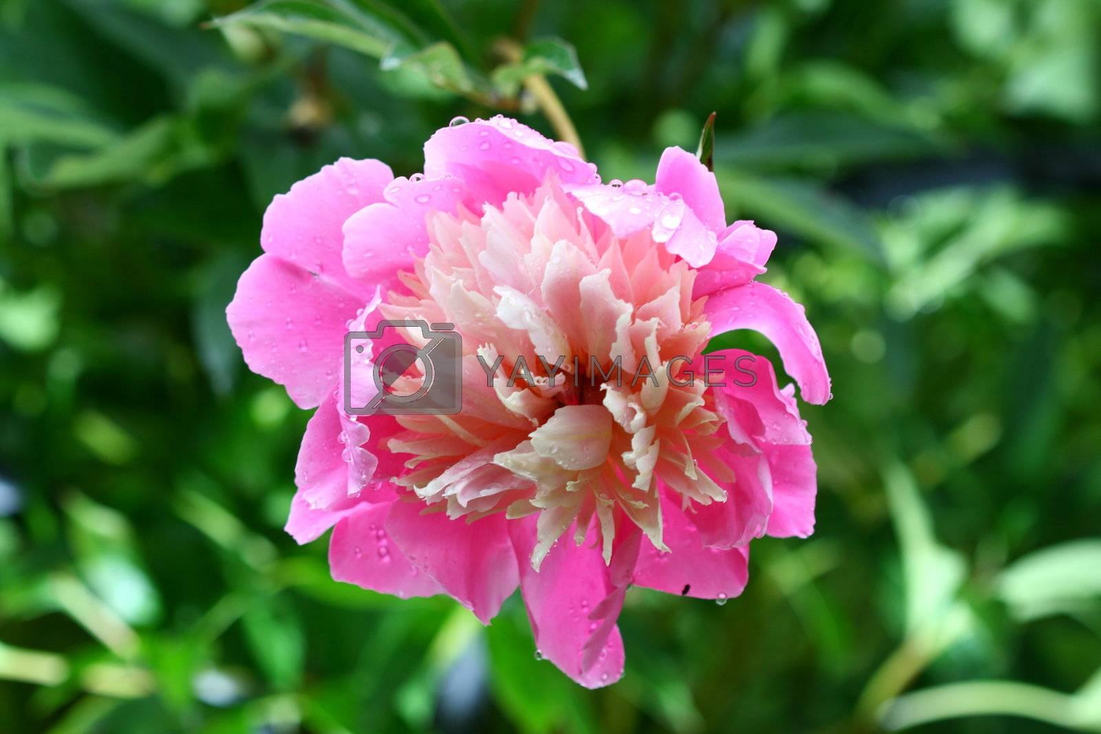 summer flower on green natural background
