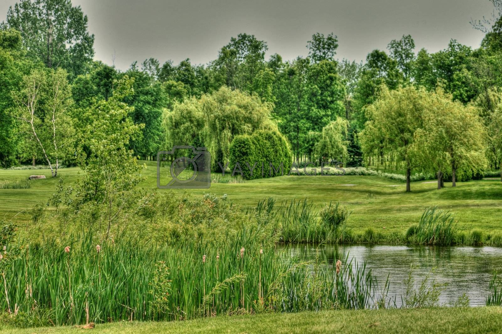 Golf green and water hazard with trees and greenery