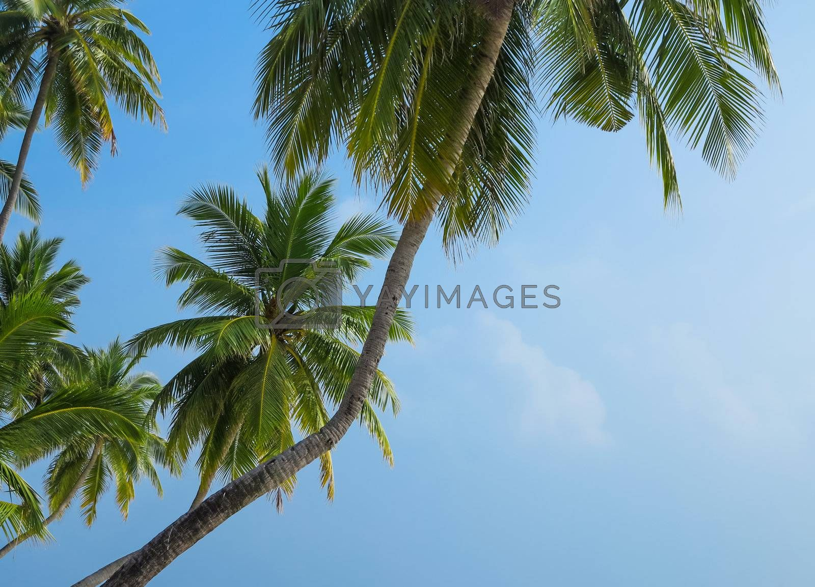 Palm trees against blue sky with clouds in Maldives.