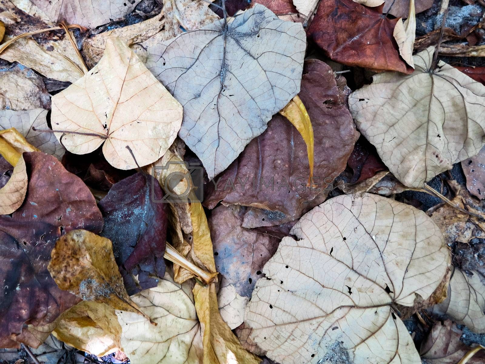 Decaying leaves, closeup shot by get4net