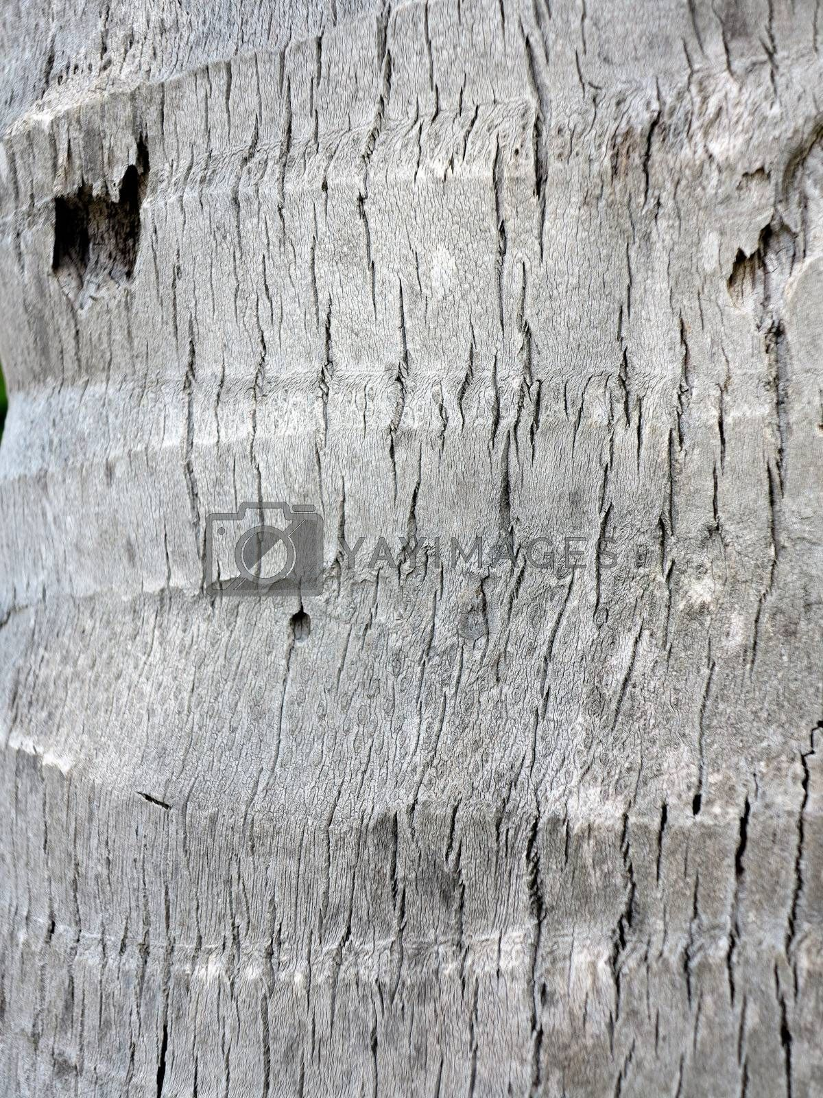 Coconut tree bark, textured by get4net