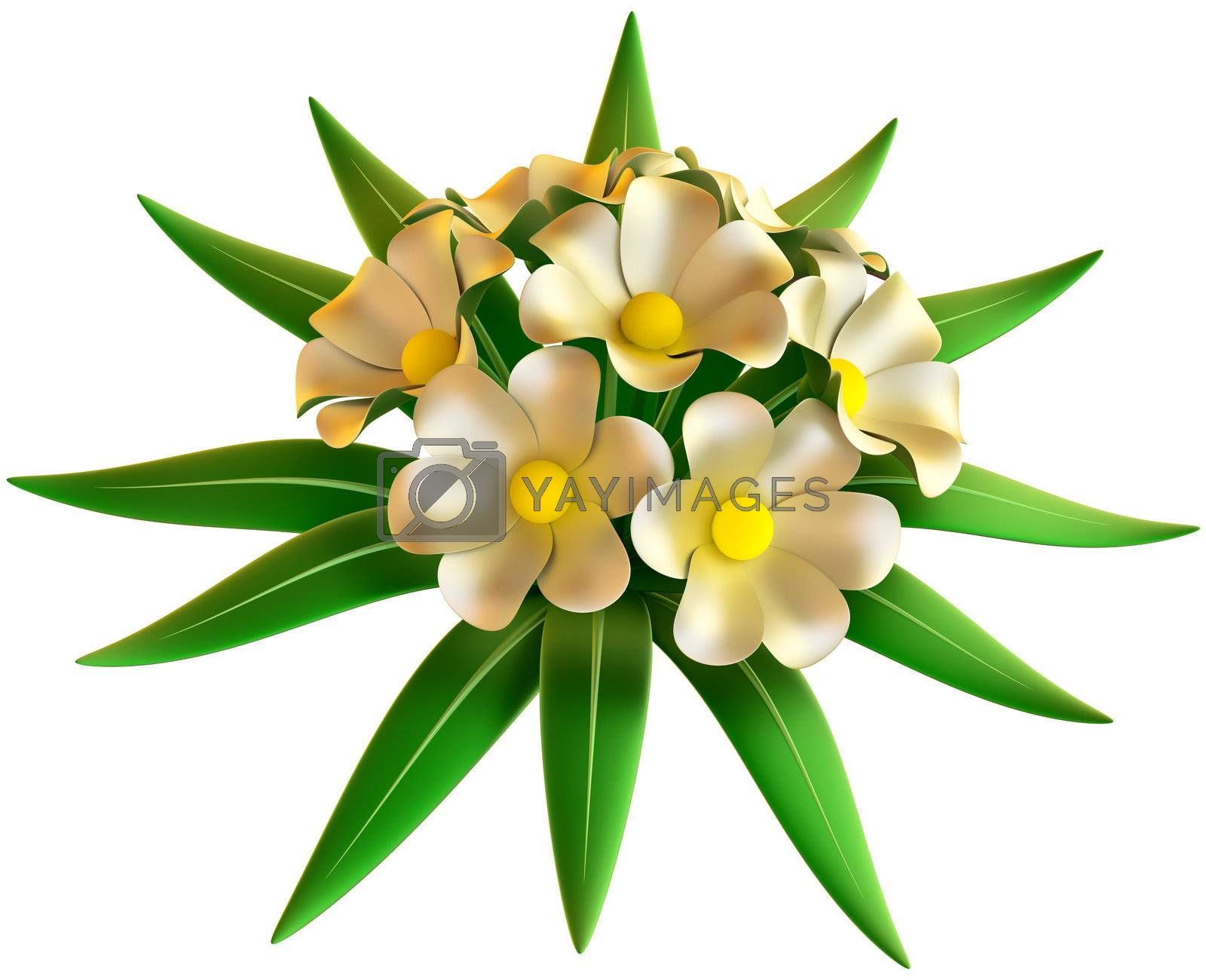 wedding bouquet of white flowers on white background