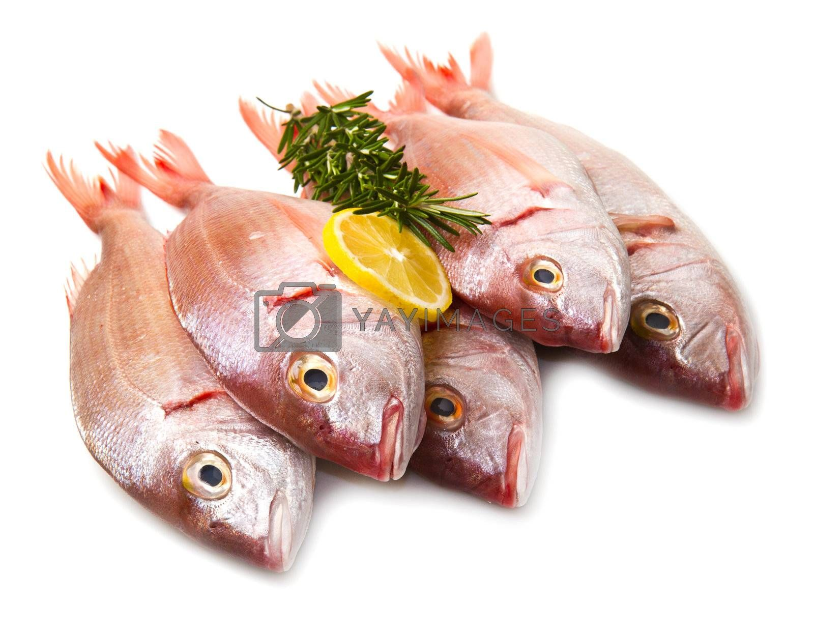 a group of sea bream with lemon and rosemary on white