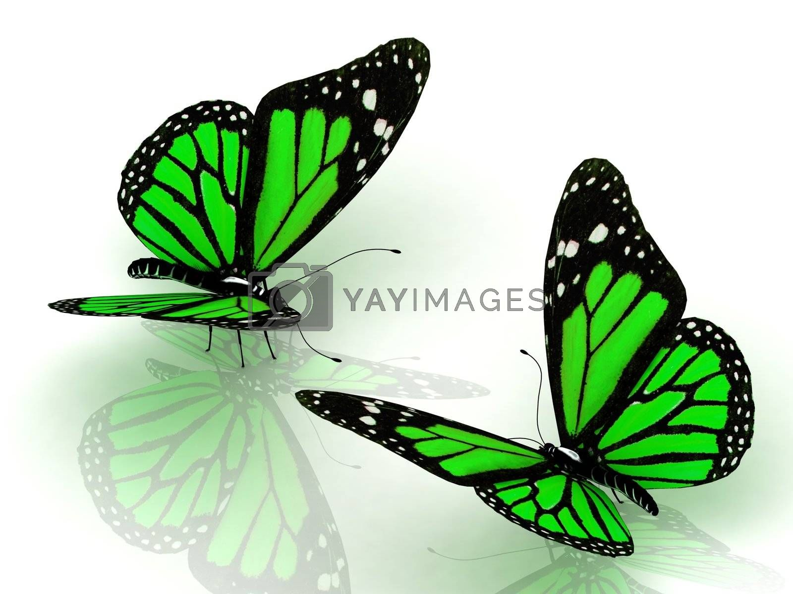 Two charming green butterflies facing each other Isolated on white background. 3D illustration