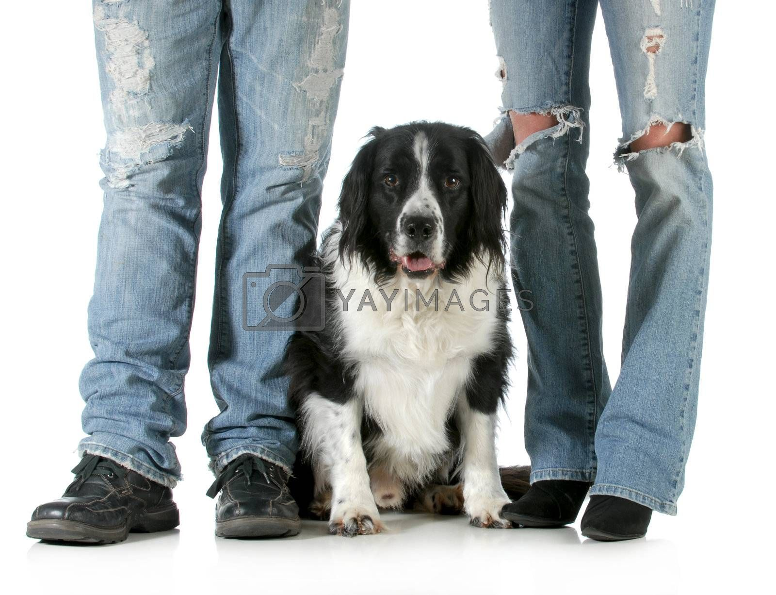 family dog - man and woman standing with their dog between them isolated on white background