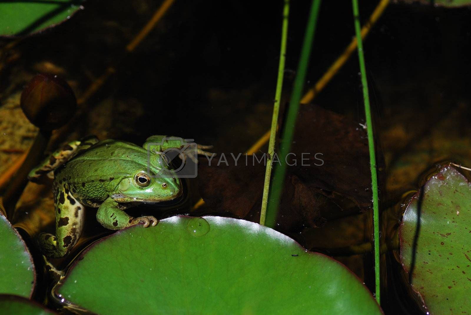 little green frog holding on to the green leaf