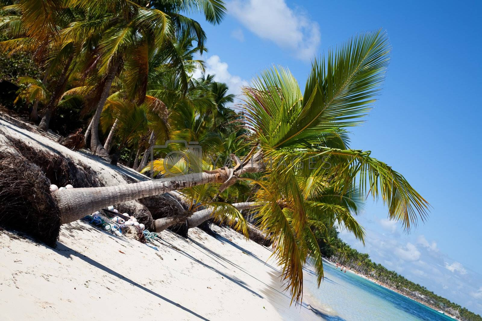 Punta cana beach and palms on the white sand