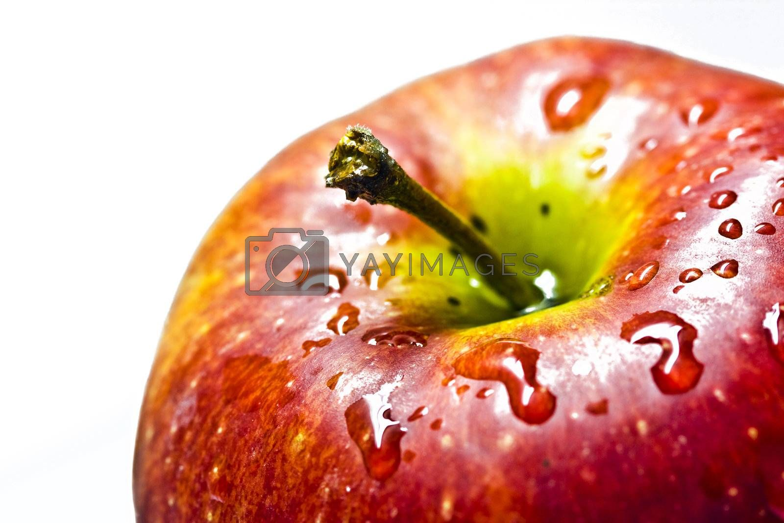 Red apple isolated on white background. Macro.