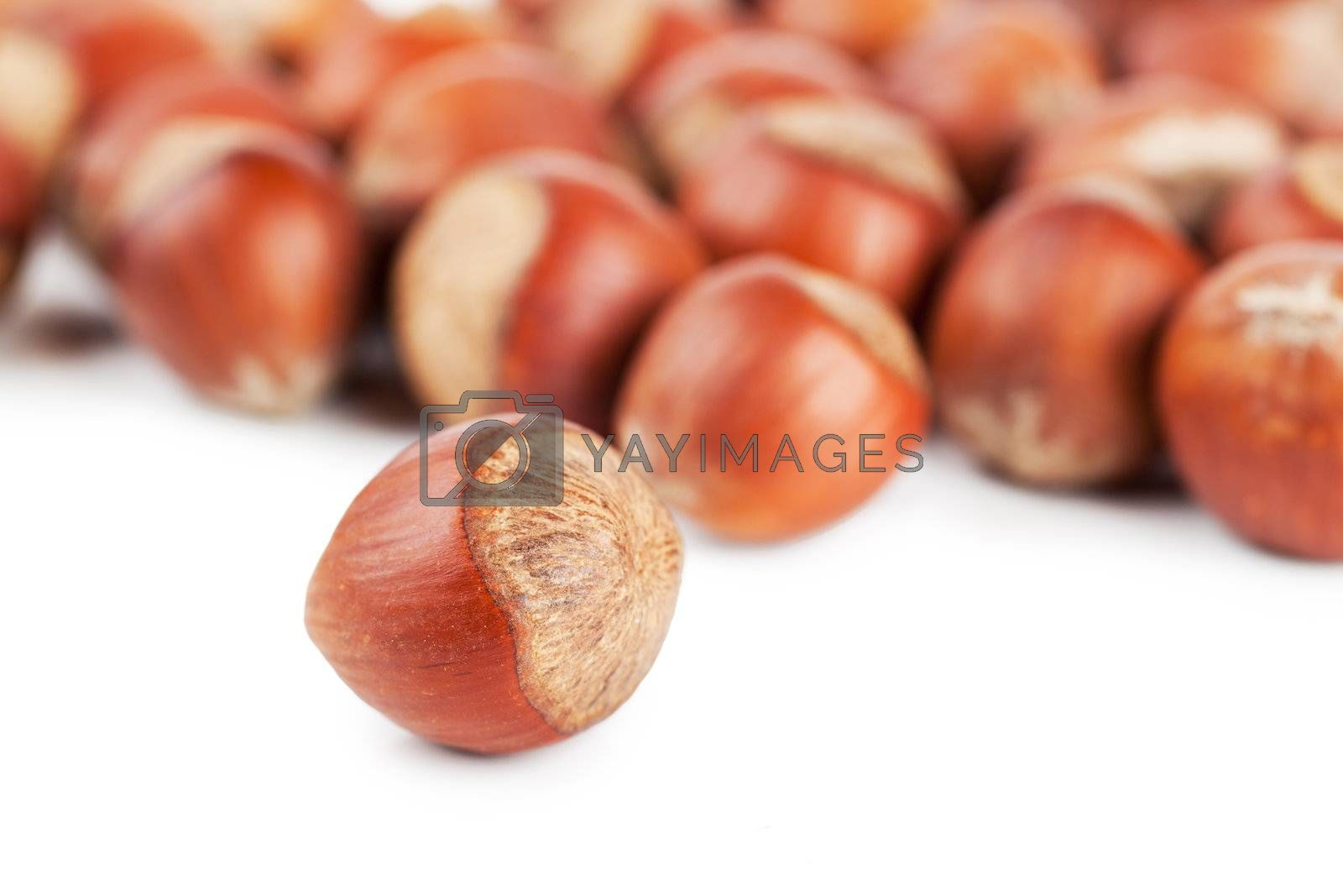 Royalty free image of Hazelnuts by AGorohov