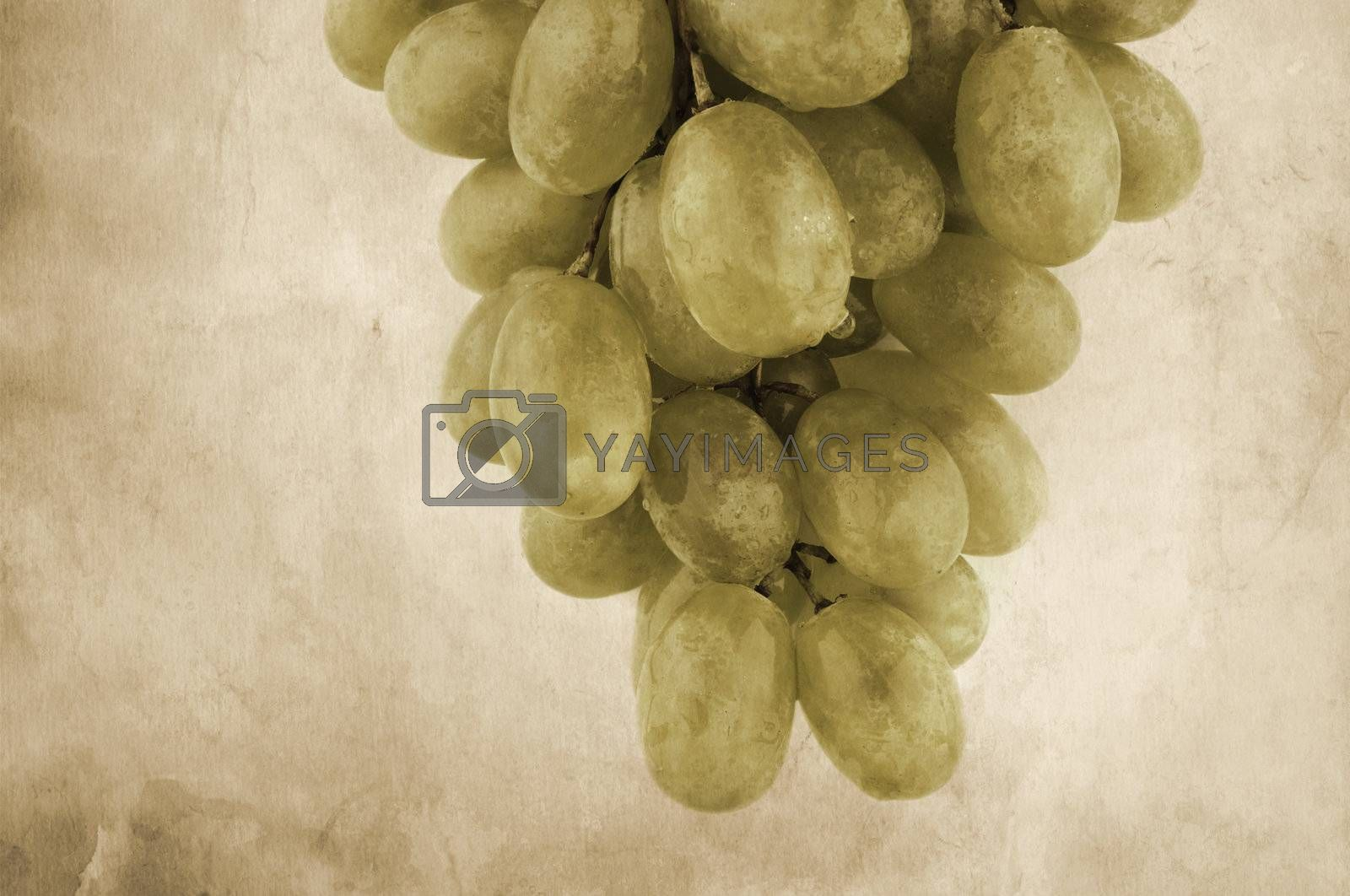 old  grunge paper texture and wet grapes