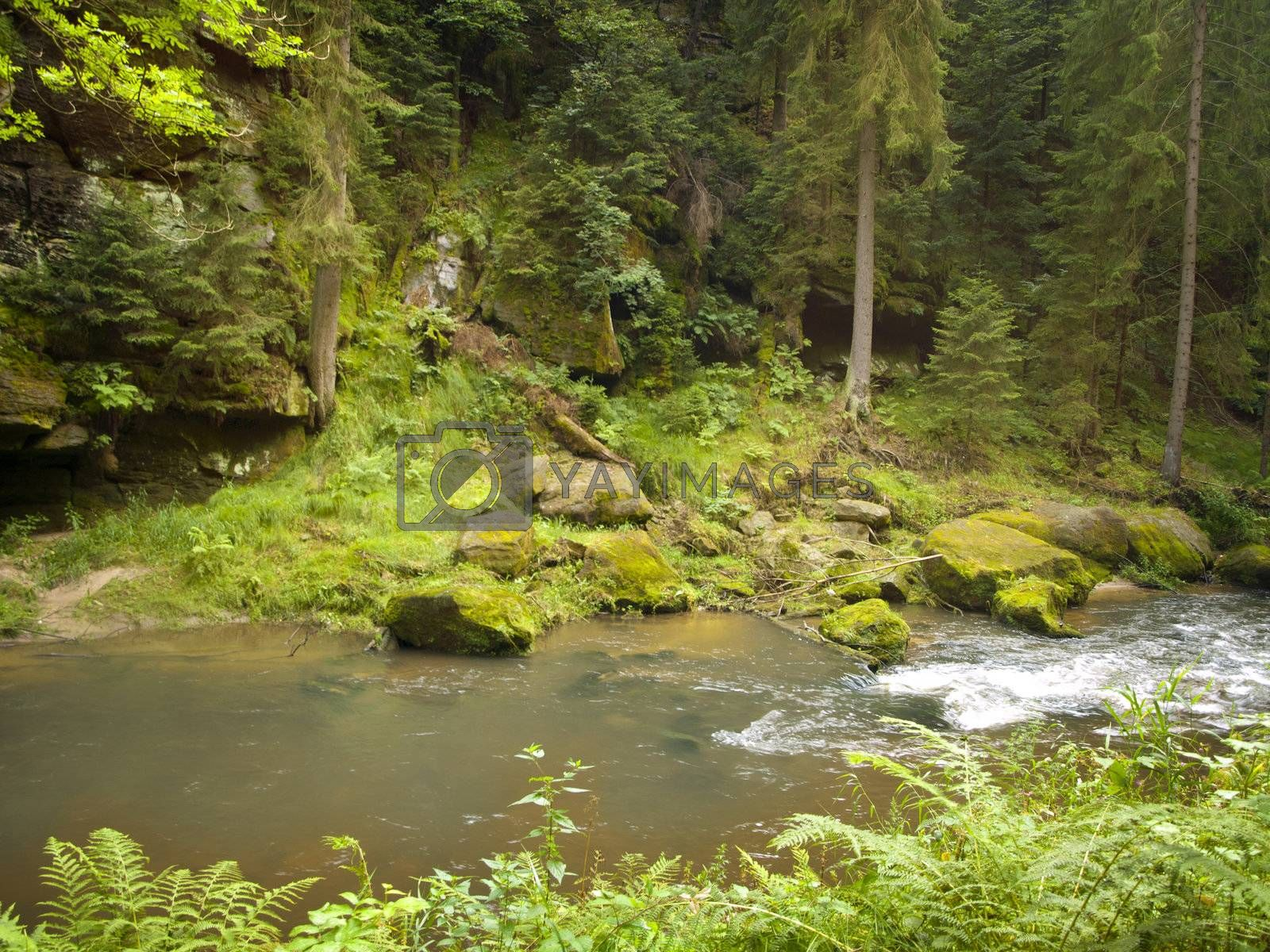 River in the wild green forest