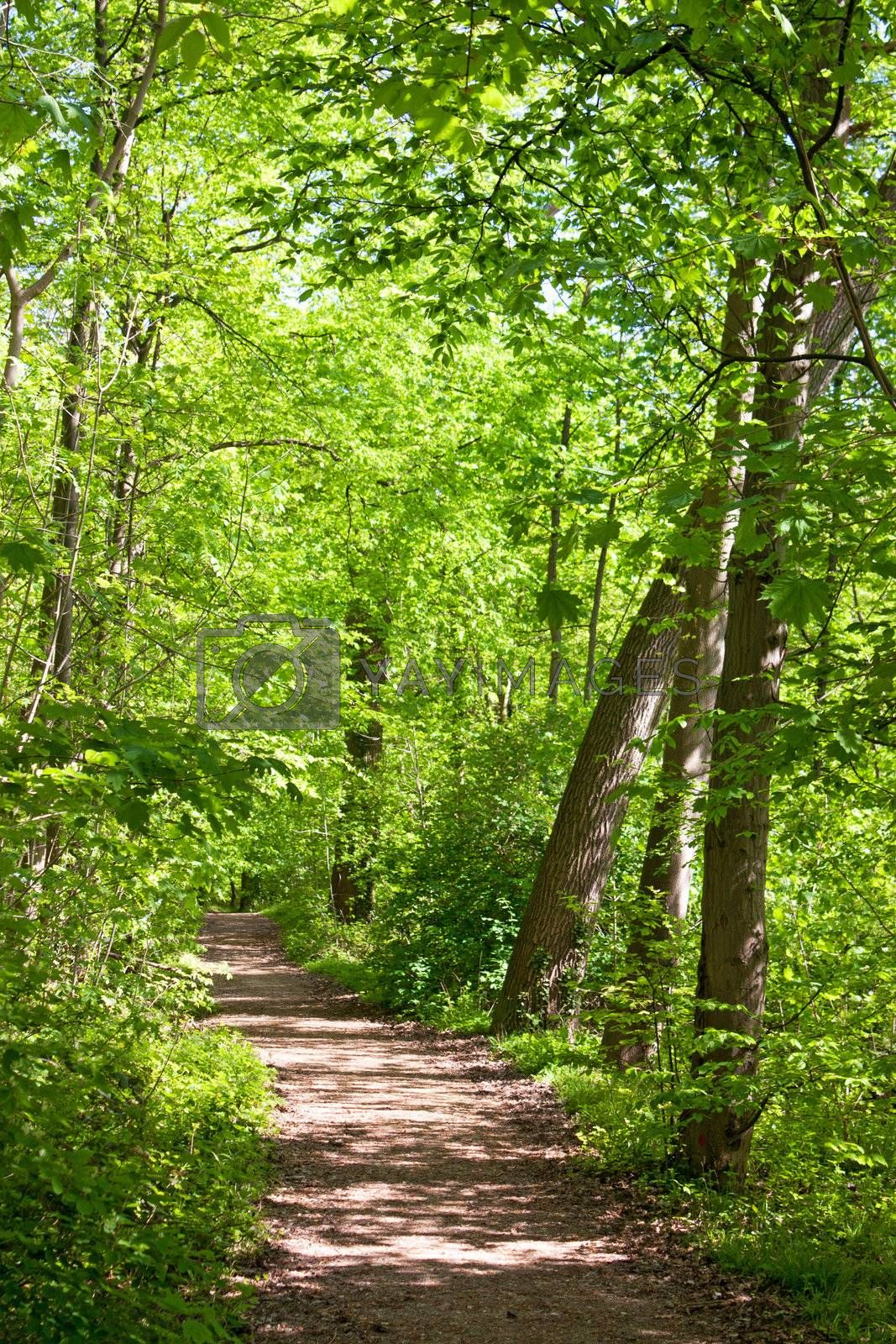 Landscape of path in spring season with nice and peaceful trees